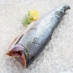 Obrázek Divoký losos keta, kuchaný, bez hlavy cca 2,5kg