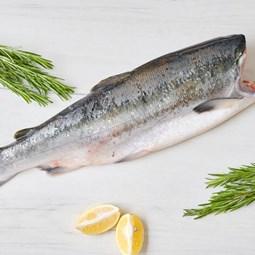 Obrázek Divoký losos nerka, kuchaný, bez hlavy cca 1,5kg