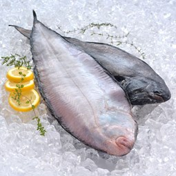 Obrázek Mořský jazyk - west coast sole 1ks cca 0,5kg